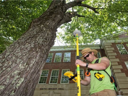 Arborist Consultations-The Hammocks FL Tree Trimming and Stump Grinding Services-We Offer Tree Trimming Services, Tree Removal, Tree Pruning, Tree Cutting, Residential and Commercial Tree Trimming Services, Storm Damage, Emergency Tree Removal, Land Clearing, Tree Companies, Tree Care Service, Stump Grinding, and we're the Best Tree Trimming Company Near You Guaranteed!