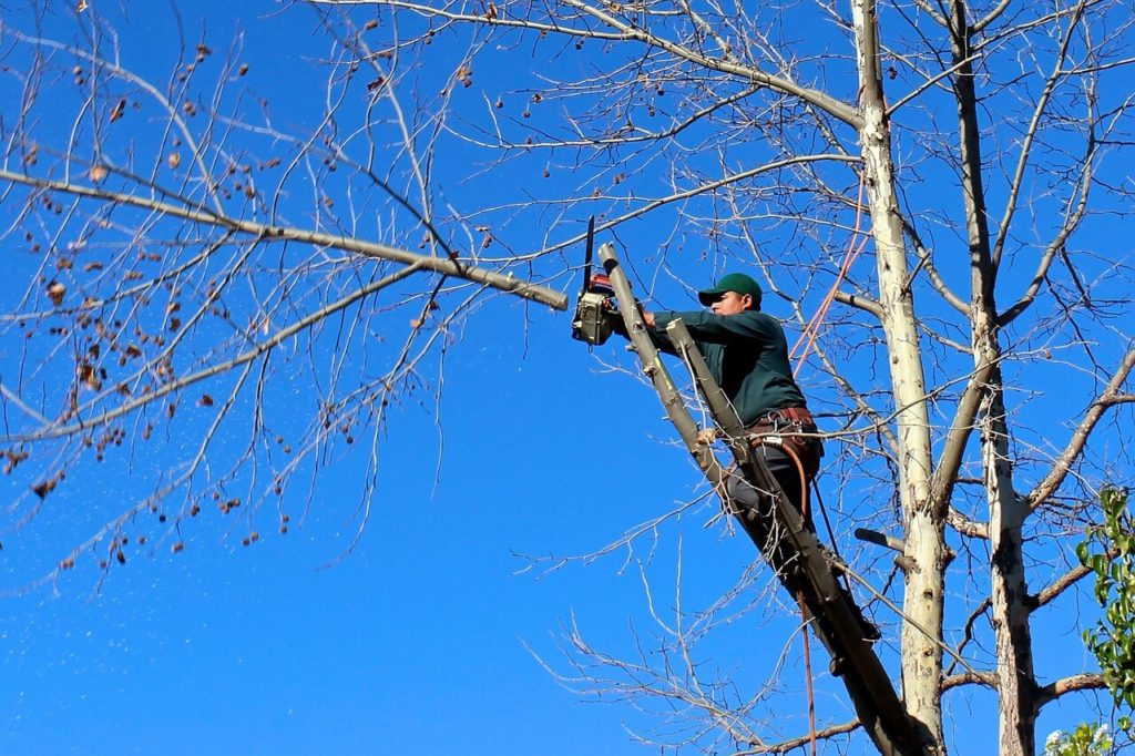 Contact Us-The Hammocks FL Tree Trimming and Stump Grinding Services-We Offer Tree Trimming Services, Tree Removal, Tree Pruning, Tree Cutting, Residential and Commercial Tree Trimming Services, Storm Damage, Emergency Tree Removal, Land Clearing, Tree Companies, Tree Care Service, Stump Grinding, and we're the Best Tree Trimming Company Near You Guaranteed!