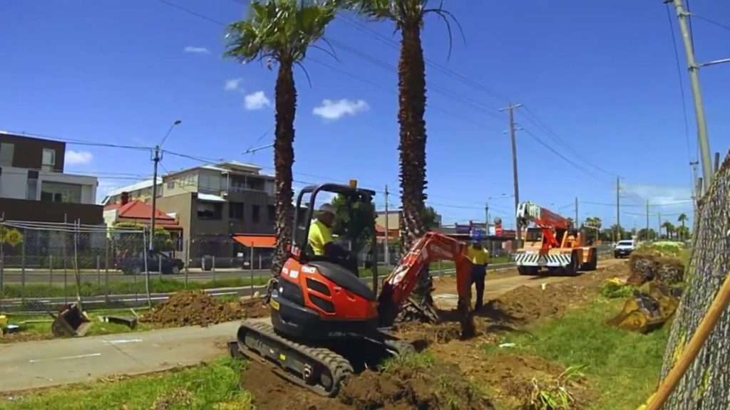Palm Tree Removal-The Hammocks FL Tree Trimming and Stump Grinding Services-We Offer Tree Trimming Services, Tree Removal, Tree Pruning, Tree Cutting, Residential and Commercial Tree Trimming Services, Storm Damage, Emergency Tree Removal, Land Clearing, Tree Companies, Tree Care Service, Stump Grinding, and we're the Best Tree Trimming Company Near You Guaranteed!