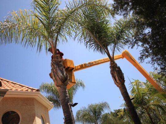 Palm Tree Trimming-The Hammocks FL Tree Trimming and Stump Grinding Services-We Offer Tree Trimming Services, Tree Removal, Tree Pruning, Tree Cutting, Residential and Commercial Tree Trimming Services, Storm Damage, Emergency Tree Removal, Land Clearing, Tree Companies, Tree Care Service, Stump Grinding, and we're the Best Tree Trimming Company Near You Guaranteed!