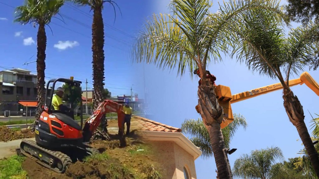 Palm tree trimming & palm tree removal-The Hammocks FL Tree Trimming and Stump Grinding Services-We Offer Tree Trimming Services, Tree Removal, Tree Pruning, Tree Cutting, Residential and Commercial Tree Trimming Services, Storm Damage, Emergency Tree Removal, Land Clearing, Tree Companies, Tree Care Service, Stump Grinding, and we're the Best Tree Trimming Company Near You Guaranteed!