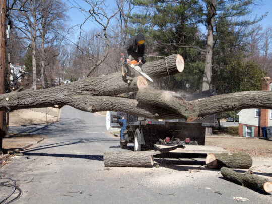 Residential Tree Services-The Hammocks FL Tree Trimming and Stump Grinding Services-We Offer Tree Trimming Services, Tree Removal, Tree Pruning, Tree Cutting, Residential and Commercial Tree Trimming Services, Storm Damage, Emergency Tree Removal, Land Clearing, Tree Companies, Tree Care Service, Stump Grinding, and we're the Best Tree Trimming Company Near You Guaranteed!