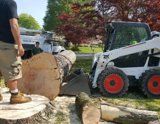 Services-The Hammocks FL Tree Trimming and Stump Grinding Services-We Offer Tree Trimming Services, Tree Removal, Tree Pruning, Tree Cutting, Residential and Commercial Tree Trimming Services, Storm Damage, Emergency Tree Removal, Land Clearing, Tree Companies, Tree Care Service, Stump Grinding, and we're the Best Tree Trimming Company Near You Guaranteed!