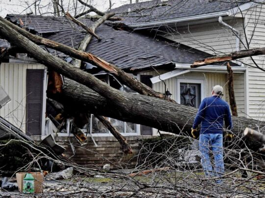 Storm Damage-The Hammocks FL Tree Trimming and Stump Grinding Services-We Offer Tree Trimming Services, Tree Removal, Tree Pruning, Tree Cutting, Residential and Commercial Tree Trimming Services, Storm Damage, Emergency Tree Removal, Land Clearing, Tree Companies, Tree Care Service, Stump Grinding, and we're the Best Tree Trimming Company Near You Guaranteed!