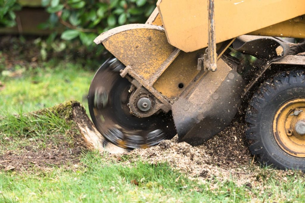 Stump Grinding-The Hammocks FL Tree Trimming and Stump Grinding Services-We Offer Tree Trimming Services, Tree Removal, Tree Pruning, Tree Cutting, Residential and Commercial Tree Trimming Services, Storm Damage, Emergency Tree Removal, Land Clearing, Tree Companies, Tree Care Service, Stump Grinding, and we're the Best Tree Trimming Company Near You Guaranteed!