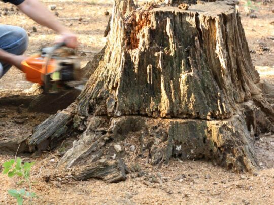 Stump Removal-The Hammocks FL Tree Trimming and Stump Grinding Services-We Offer Tree Trimming Services, Tree Removal, Tree Pruning, Tree Cutting, Residential and Commercial Tree Trimming Services, Storm Damage, Emergency Tree Removal, Land Clearing, Tree Companies, Tree Care Service, Stump Grinding, and we're the Best Tree Trimming Company Near You Guaranteed!
