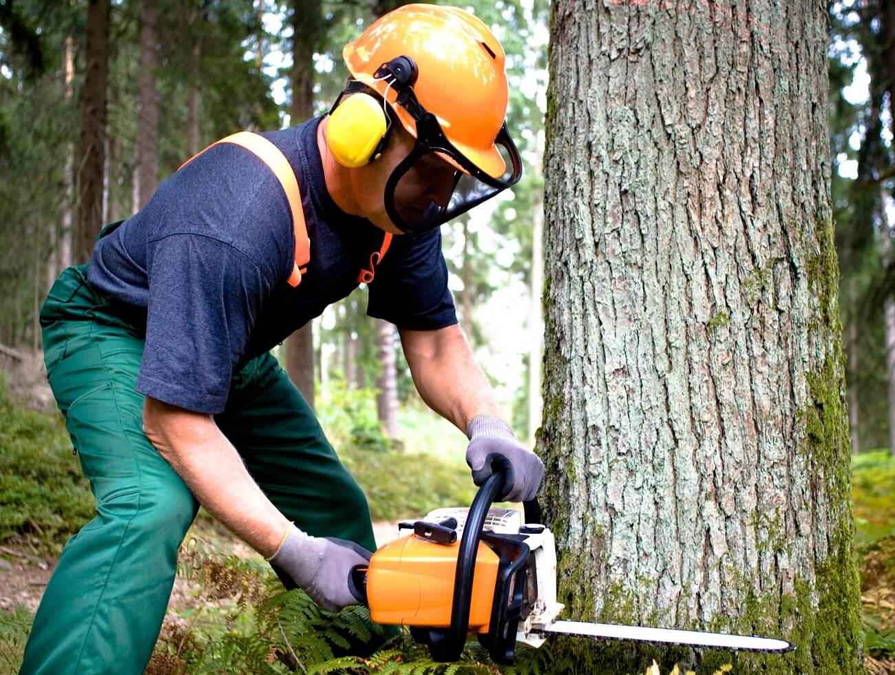 The Hammocks FL Tree Trimming and Stump Grinding Services Home Page-We Offer Tree Trimming Services, Tree Removal, Tree Pruning, Tree Cutting, Residential and Commercial Tree Trimming Services, Storm Damage, Emergency Tree Removal, Land Clearing, Tree Companies, Tree Care Service, Stump Grinding, and we're the Best Tree Trimming Company Near You Guaranteed!