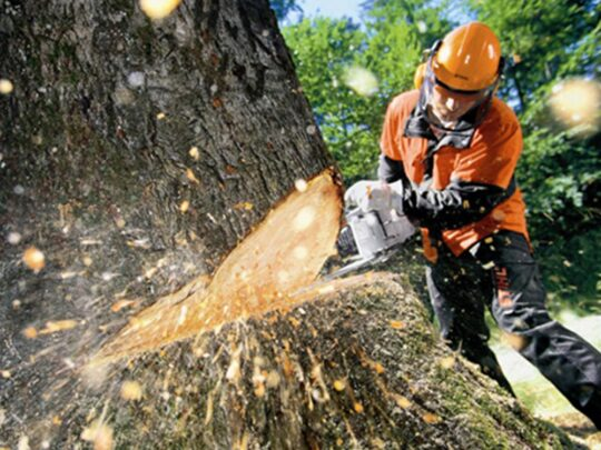 Tree Cutting-The Hammocks FL Tree Trimming and Stump Grinding Services-We Offer Tree Trimming Services, Tree Removal, Tree Pruning, Tree Cutting, Residential and Commercial Tree Trimming Services, Storm Damage, Emergency Tree Removal, Land Clearing, Tree Companies, Tree Care Service, Stump Grinding, and we're the Best Tree Trimming Company Near You Guaranteed!