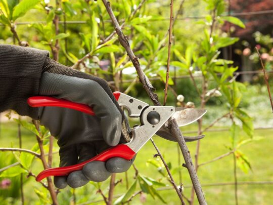 Tree Pruning-The Hammocks FL Tree Trimming and Stump Grinding Services-We Offer Tree Trimming Services, Tree Removal, Tree Pruning, Tree Cutting, Residential and Commercial Tree Trimming Services, Storm Damage, Emergency Tree Removal, Land Clearing, Tree Companies, Tree Care Service, Stump Grinding, and we're the Best Tree Trimming Company Near You Guaranteed!