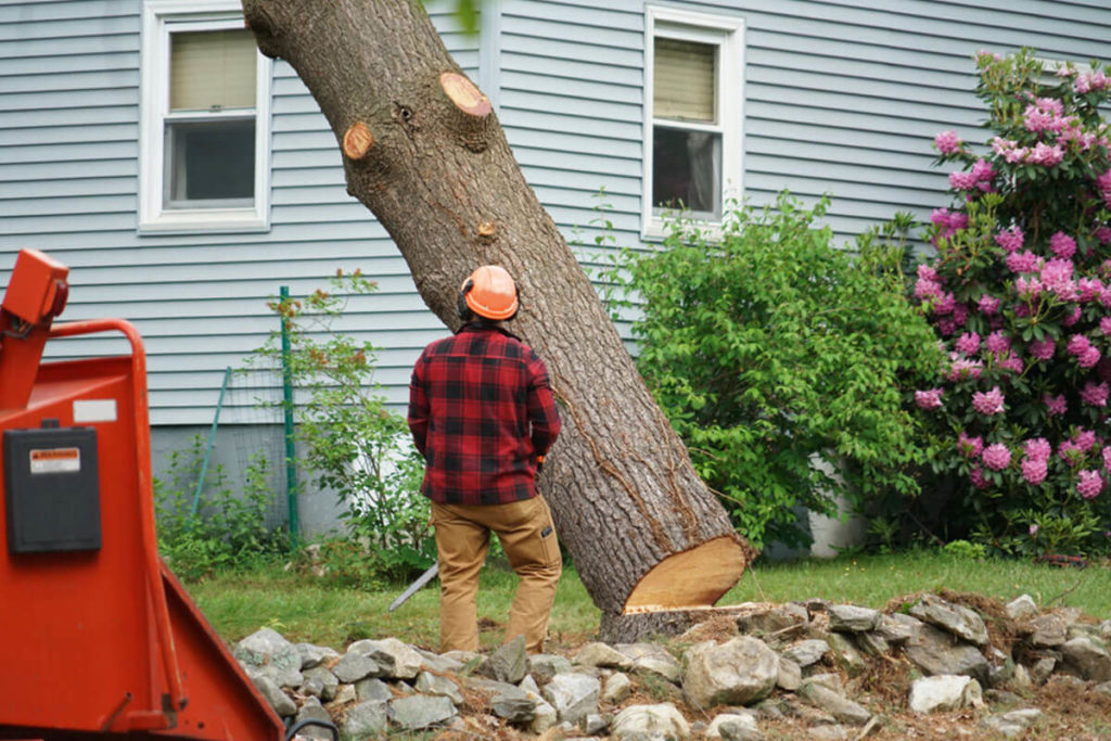 Tree Removal-The Hammocks FL Tree Trimming and Stump Grinding Services-We Offer Tree Trimming Services, Tree Removal, Tree Pruning, Tree Cutting, Residential and Commercial Tree Trimming Services, Storm Damage, Emergency Tree Removal, Land Clearing, Tree Companies, Tree Care Service, Stump Grinding, and we're the Best Tree Trimming Company Near You Guaranteed!