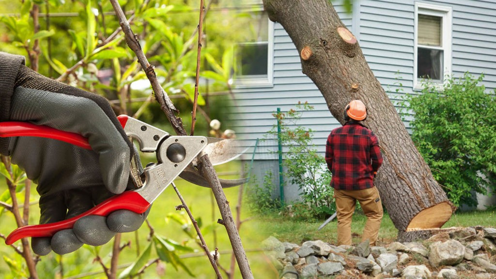 Tree pruning & tree removal-The Hammocks FL Tree Trimming and Stump Grinding Services-We Offer Tree Trimming Services, Tree Removal, Tree Pruning, Tree Cutting, Residential and Commercial Tree Trimming Services, Storm Damage, Emergency Tree Removal, Land Clearing, Tree Companies, Tree Care Service, Stump Grinding, and we're the Best Tree Trimming Company Near You Guaranteed!